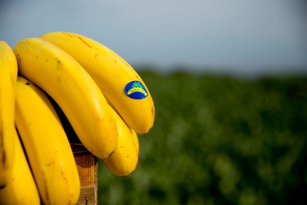 Plátanos con la etiqueta de Canarias.