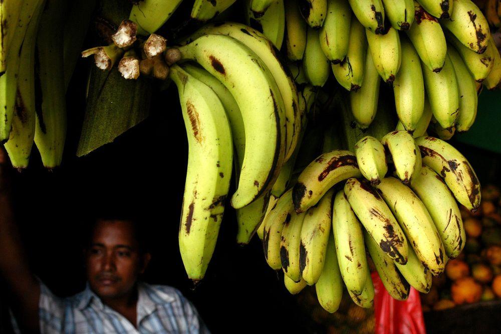 La liberalización de la banana en la UE, seria amenaza para el plátano