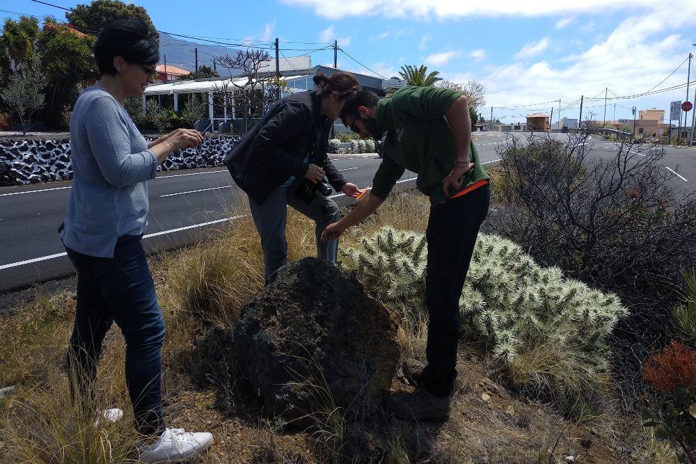 Encuentran una nueva planta invasora en La Palma.